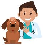 was kostet eine Hundekrankenversicherung