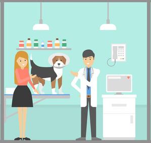 Hundekrankenversicherung für Tierarztkosten