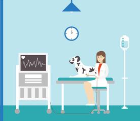 Preisbeispiel Hundekrankenversicherung